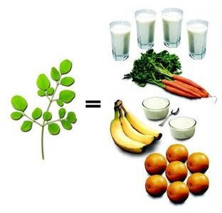 Moringa Equivalents